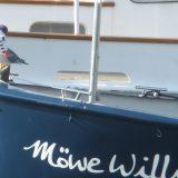 moewe-willi-1